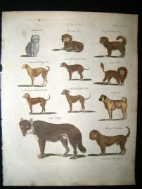 Encyclopaedia Britannica C1790 HC Print. Canis. King Charles, Pug, Turkish Dogs